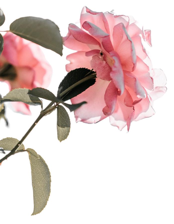 flower, lifestyle fair